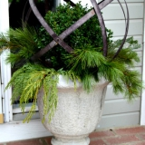 Boxwood-and-Christmas-greens-in-urn