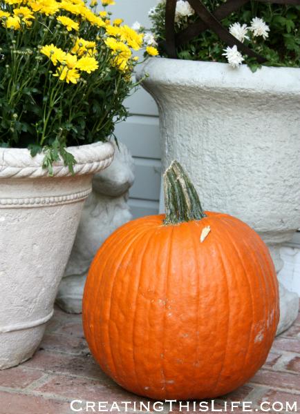 Fall mums and pumpkins