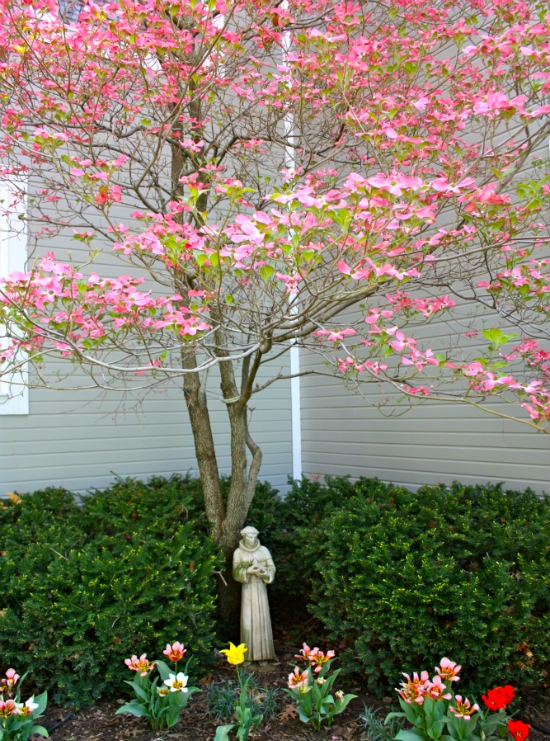 Pink-Dogwood-at-CreatingThisLife.com_