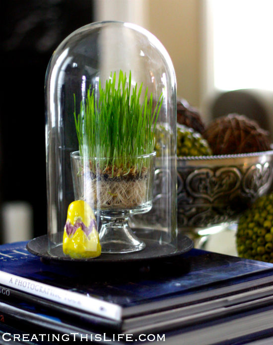easter-grass-under-cloche