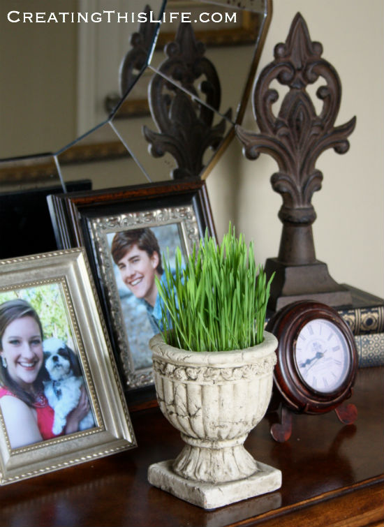 how-to-grow-wheat-grass-for-easter