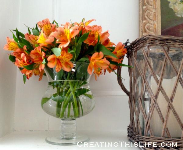 orange alstromeria