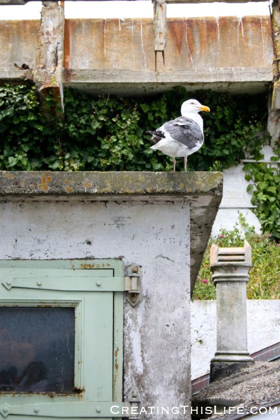 san-francisco-alcatraz-seagull