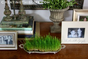 Wheat Grass for Spring