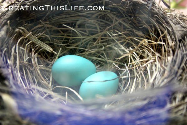 two-robins-eggs-in-nest