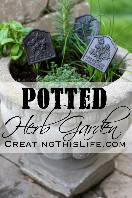Potted herb garden at CreatingThisLife.com