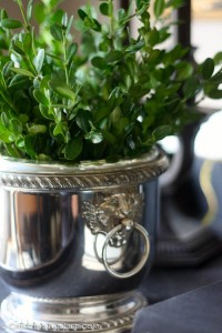 Let's Talk Boxwood