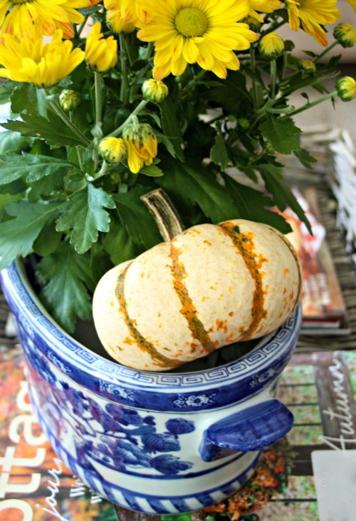 Blue and white planter with mums and pumpkin