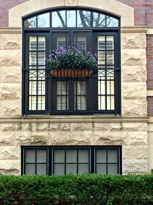Lincoln Park Window