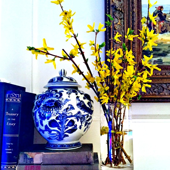 Blooming forsythia on mantel