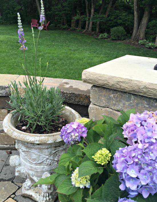 lavender and hydrangea